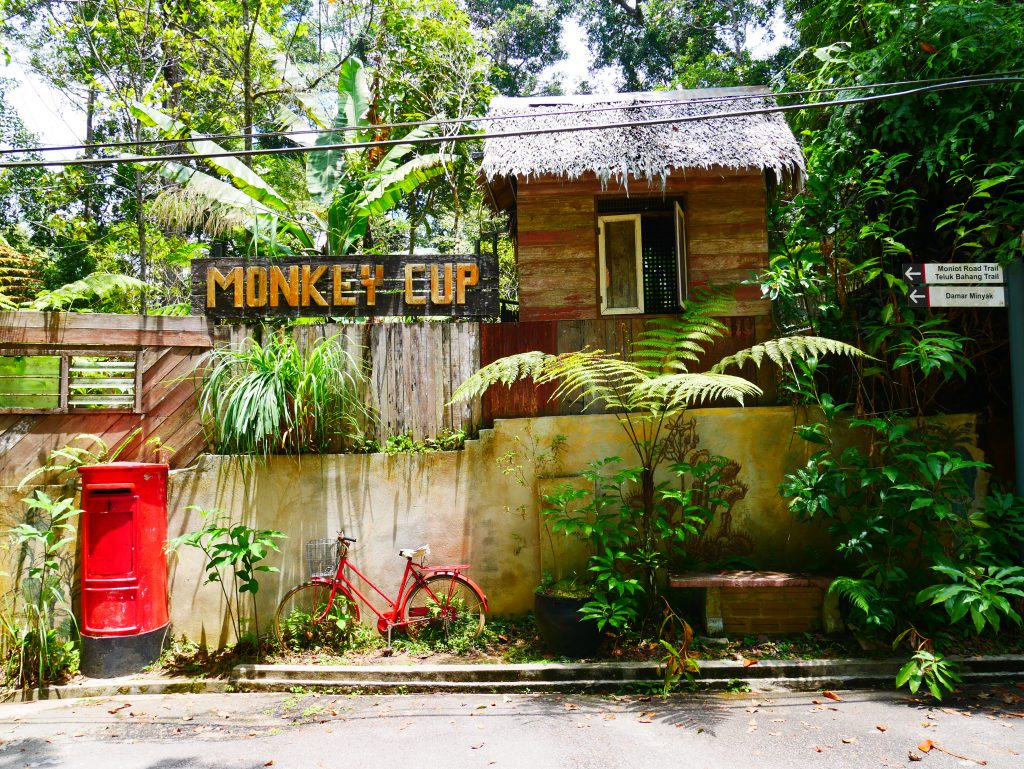 Monkey Cup à Penang Hill